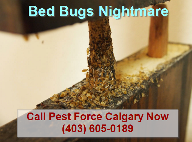 bed_bugs_calgary_cost