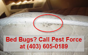 get_rid_of_bed_bugs